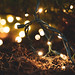 VanDusen Festifal Of Lights