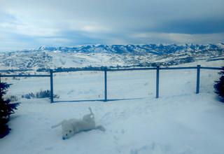 Mavis - snow roll