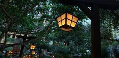 Day 55 Feb 24 - Lamp posts