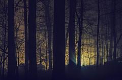 Misty Light