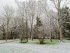 Snow 273-DXO3