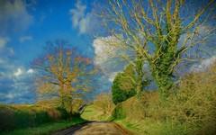 Bright sunshiny road