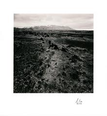 Lava Field, Iceland 1975
