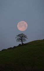 Setting Snow Moon