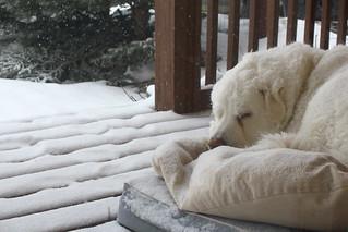 Happy, snowy Mavis