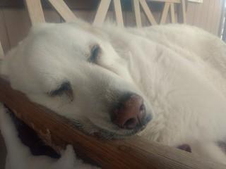Mavis, porch nap
