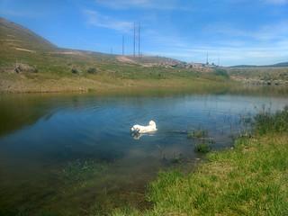 Mavis swimming at the inlet
