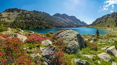 Lac d'Aumar (Réserve du Néouvielle, Hautes Pyrenées) 27 juin 2020