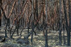 _DSC6660-ff-Mendocino Complex Wildfire - Ranch Wildfire