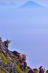Monte Cocuzzo Calabria Italy sullo Sfondo lo Stromboli