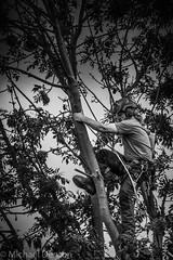 Tree Surgeon 2BW