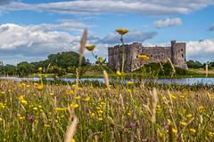 Carew_Castle_Flowers_July2020