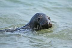 Swimming partner