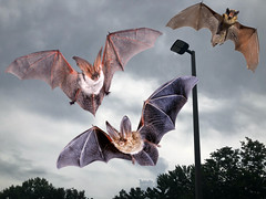 Seconds Before Being Attacked By Three Killer Bats