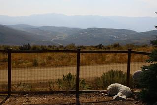 Mavis and smoky mountains