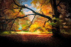Vivid Tree art