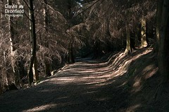 IMG_0386: Dodd Wood Cumbria UK