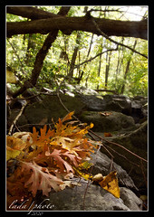 Fall in Devil's Lake  EXPLORE 10_24_2020