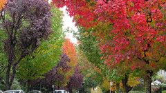 my street full of color... explore October 2020