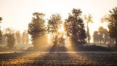 Matin d'automne dans la campagne Rennaise...
