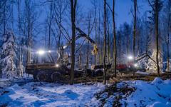 Forstarbeiten, die letzte Fichte fällt