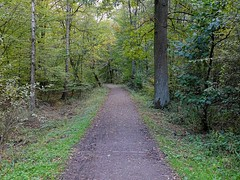 A trail through Lake Bever forest