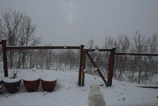 Mavis enjoying the snow