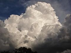 Cumulus Cogestive  (In Explore)