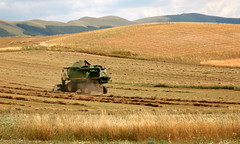 Lavoro nei campi - Working in the fields