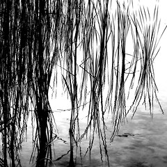 Reeds and Weeds