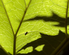 Rhubarbs and annoying flies
