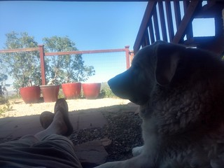Hanging out under the house with Mavis