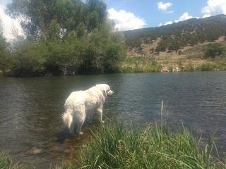 Mavis at the river