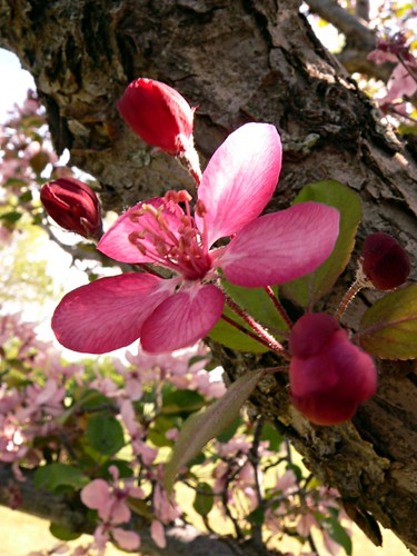 pink flower on a tree