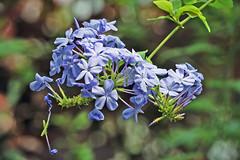 Krohn-Flower-14