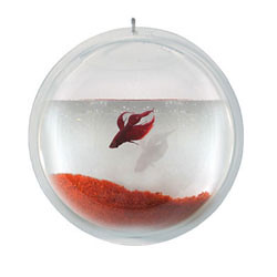 Hanging Fish Pod: Betta Fish Vase / Bowl  from postmodernpets.com