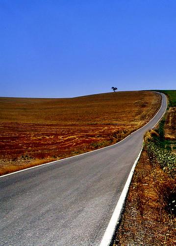 Carretera hacia la encina