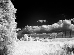Infrared vision, Passmore Avenue (abandoned), 07