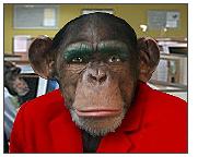 monkeymail