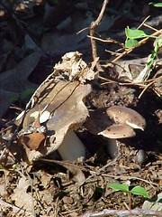 mushroom (july)