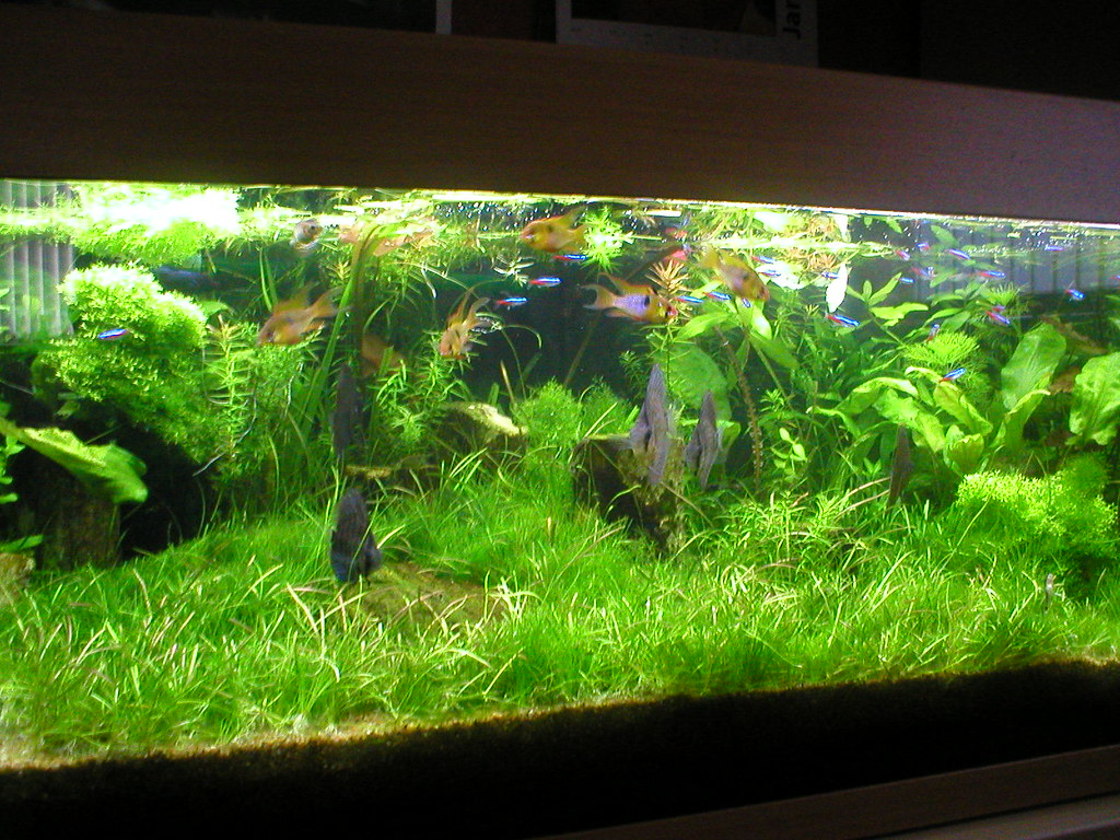 My co2 freshwater planted aquarium tropical fish keeping for Co2 fish tank