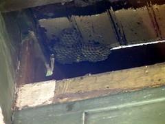 Beehive behind fallen board
