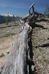 Snag at Fortune Pass - Esmeralda Basin