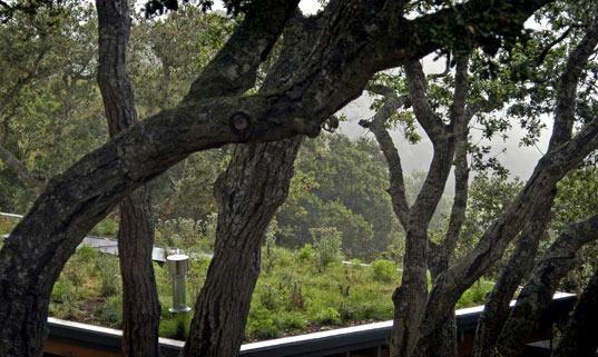 rana creek, green roof, living roof, ecological restoration
