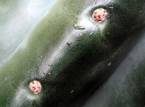 CactusClose