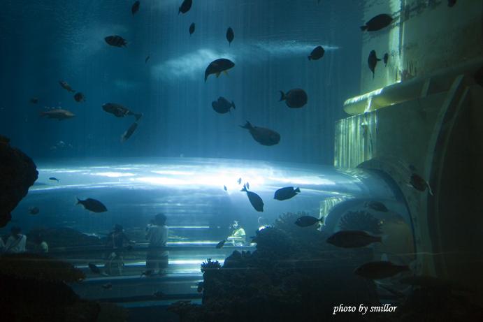 屏東海洋生物館最佳觀賞海洋生態的海底隧道
