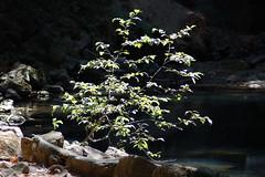 treeletpond