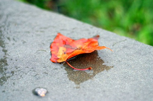 first fall leaf