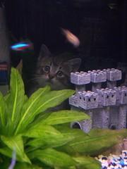 Kitten Fish Tank