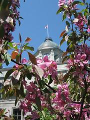 fleurs & building ancien